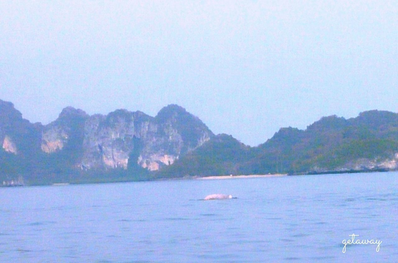 Pink dophin, Love Thailand Happy Holidays @kanom