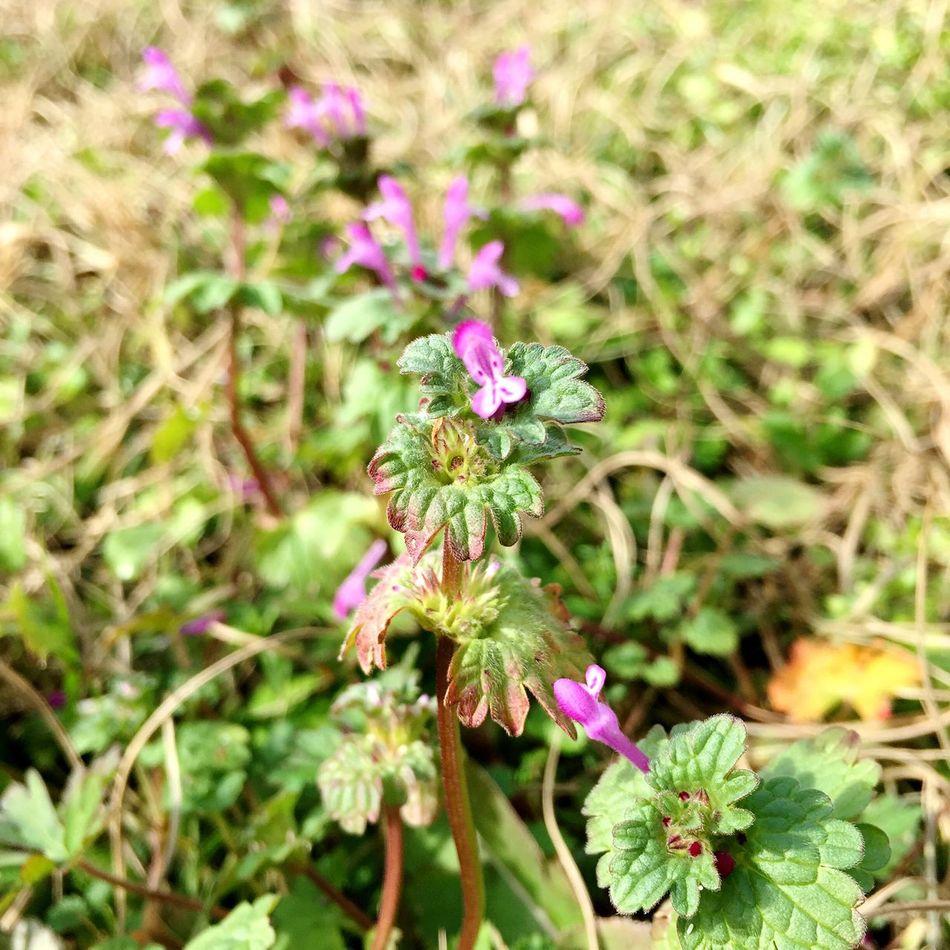 Wildflowers Flowers Purple Flower