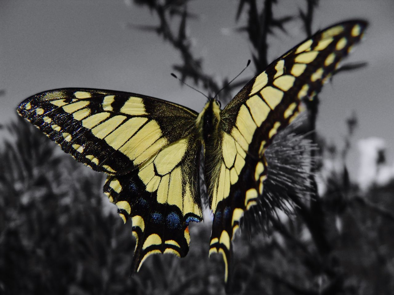 insect, animal themes, butterfly - insect, animals in the wild, animal wing, one animal, butterfly, animal wildlife, close-up, no people, nature, focus on foreground, animal markings, spread wings, outdoors, full length, perching, beauty in nature, day, freshness