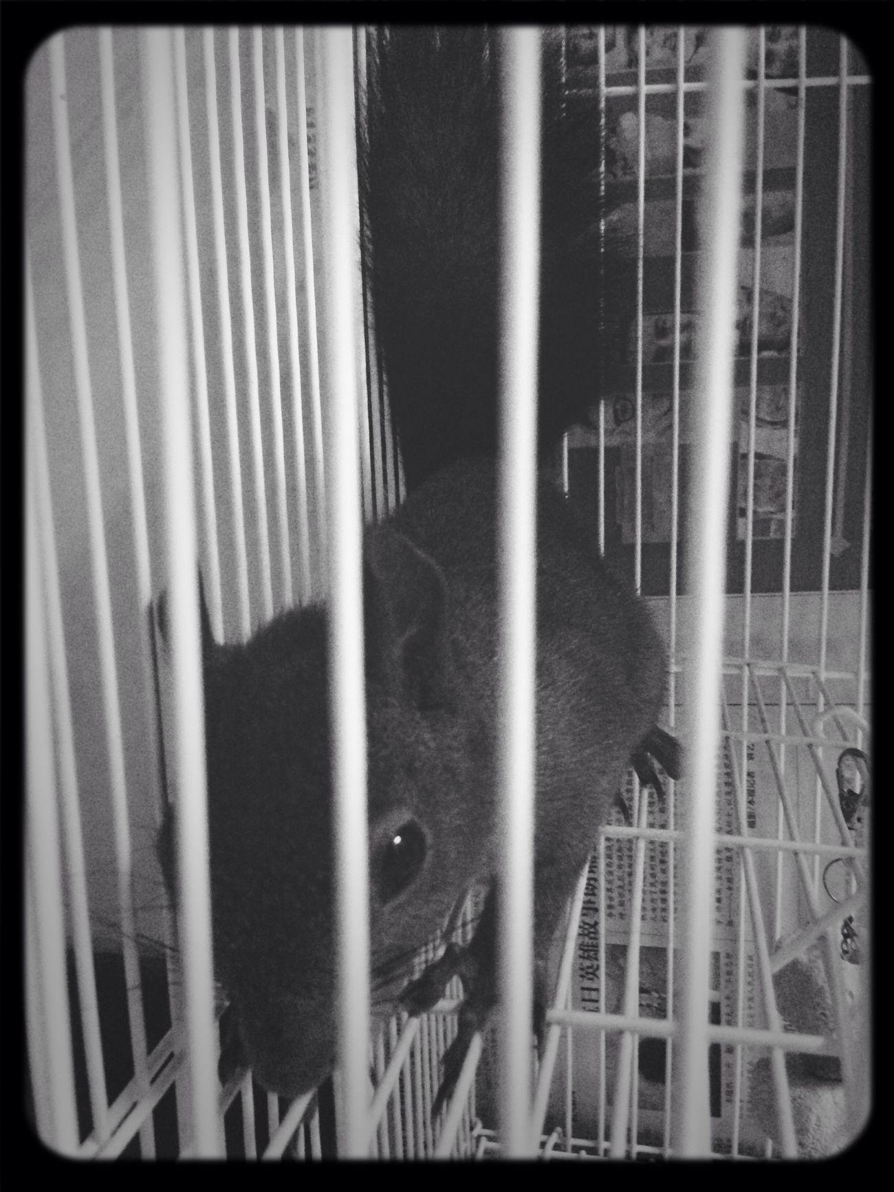 闹闹,安静的时候 魔王松鼠