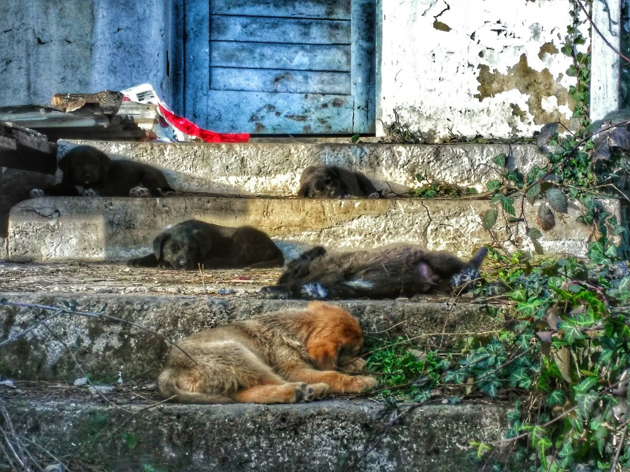 Dog Dogs Old Ruin Photography Photooftheday Photo Old House Nature Photography Photographer Nature Oldpicture Popular Photos Capture The Moment ı Love My City