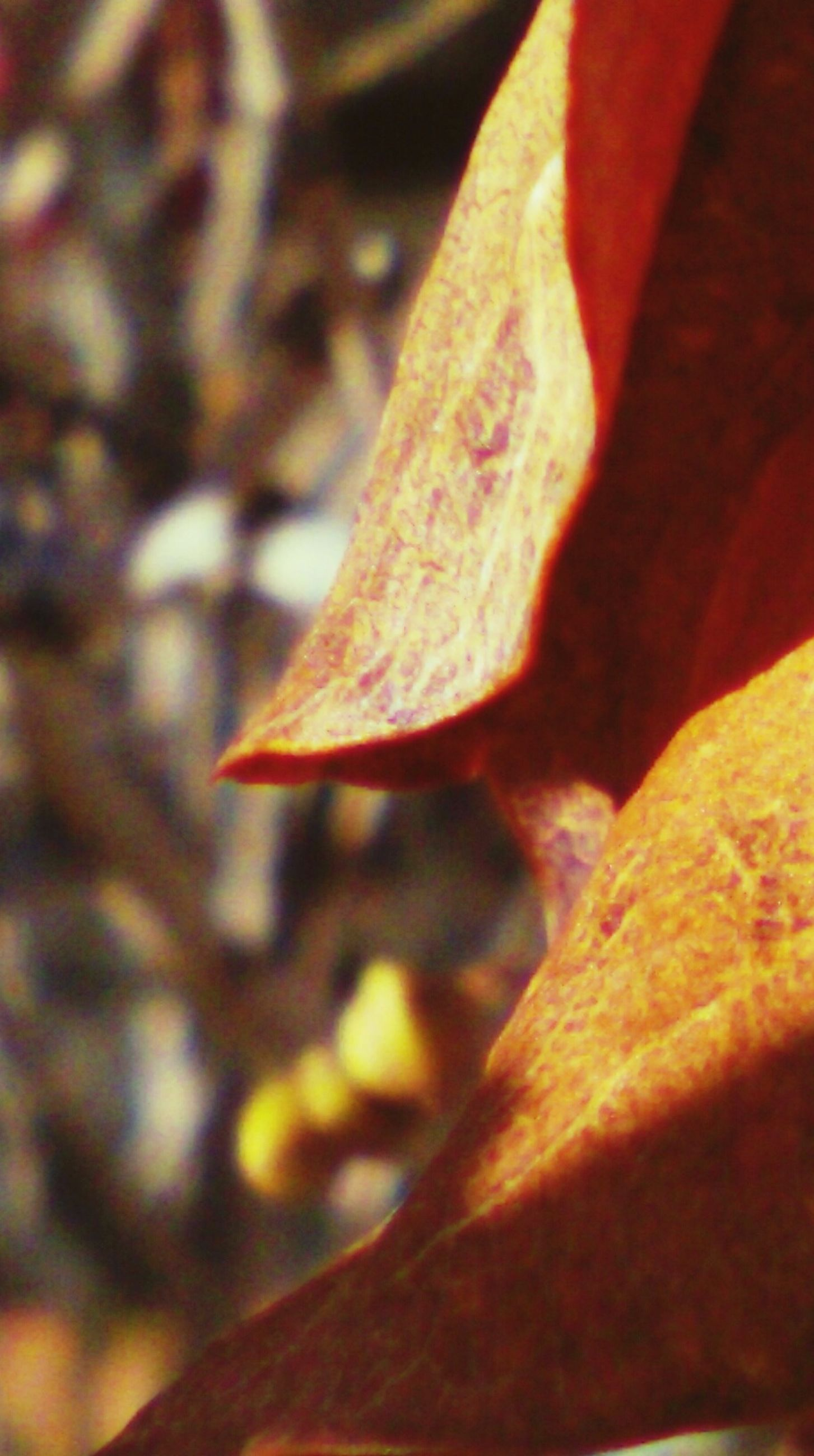leaf, close-up, focus on foreground, autumn, nature, change, leaf vein, natural pattern, selective focus, growth, dry, leaves, season, beauty in nature, outdoors, tranquility, sunlight, day, no people, fragility