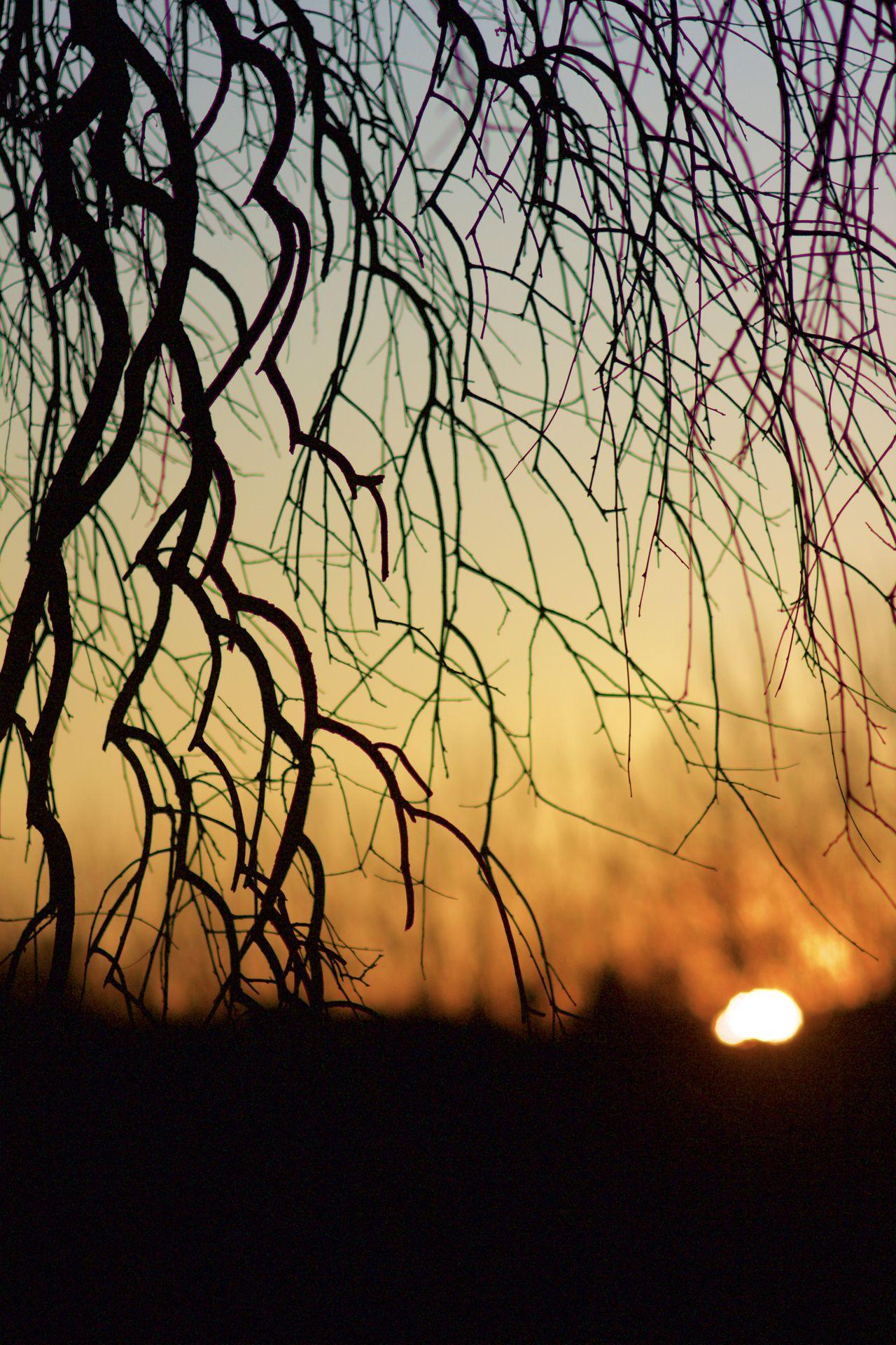Tree Silhouette Atmosphere Branch Glowing Italy Light Nature Silhouette Sun Sunset Tree Tree Silhouette