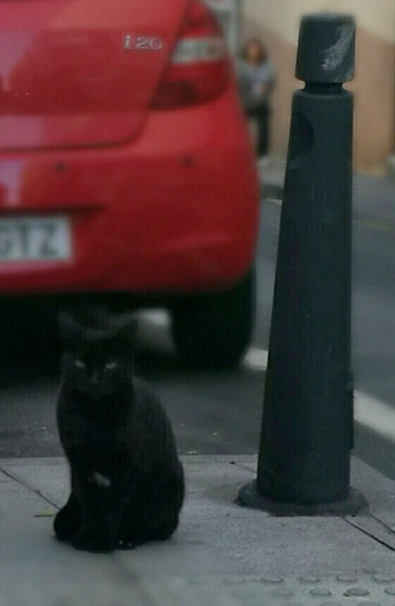 Cats Of EyeEm Cat Streetphotography Bokeh GatoNegro BLackCat