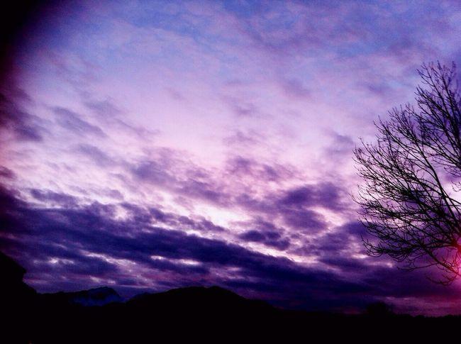 Sunset Tree Sun Evening Sky