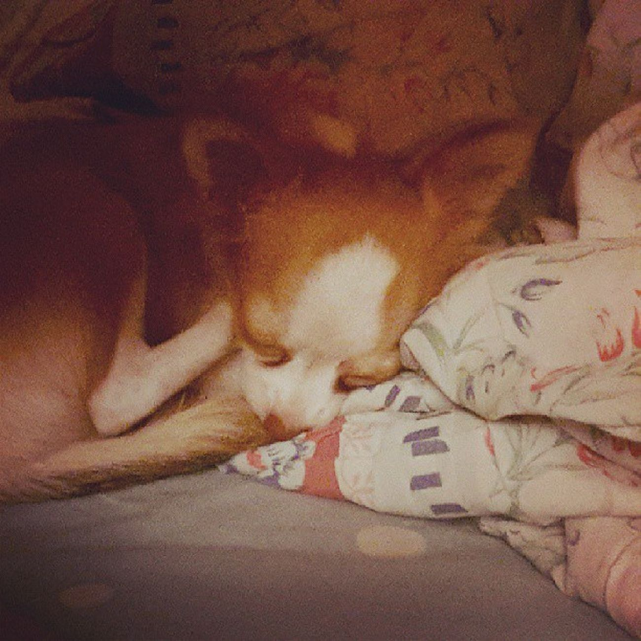 นอนหลบมุม หามุมหลบ นอนหลับฝันดี Sweet Dream on Wednesday Night เขินกล้อง ไม่ยอมให้ถ่าย Kimmydoggy