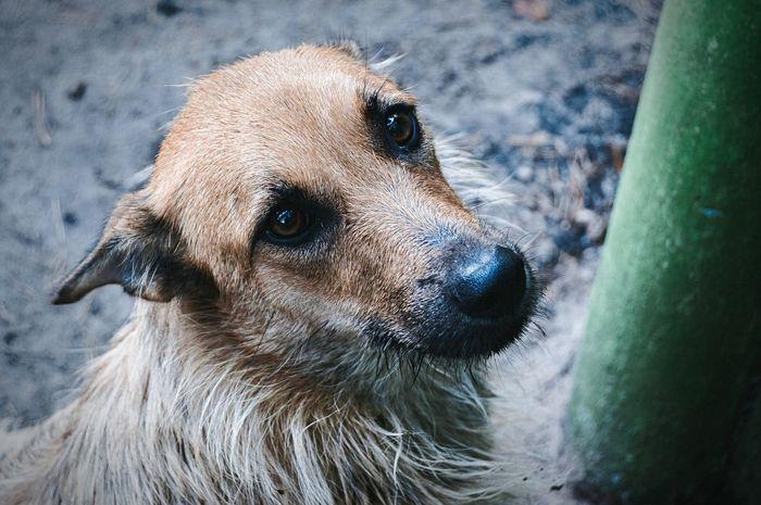 Dog Dog Saddog Sad Sadness Sadness... Nature Eyes Soul собака собака друг человека печаль грусть Alone