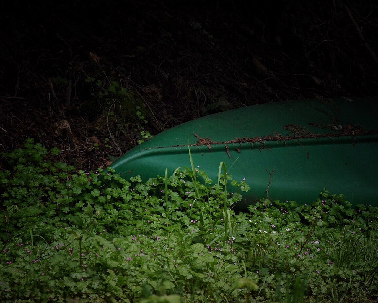 Green Color No People Growth Nature Plant Outdoors Leaf Tranquility Day Beauty In Nature Forest Grass Close-up The Great Outdoors - 2017 EyeEm Awards Waterfront Boat Pond Life Canoe Transportation Hidden Treasure Forgotten Forgotten Places  Green Color Water_collection