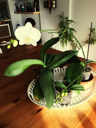 Plant Flower Home Interior No People