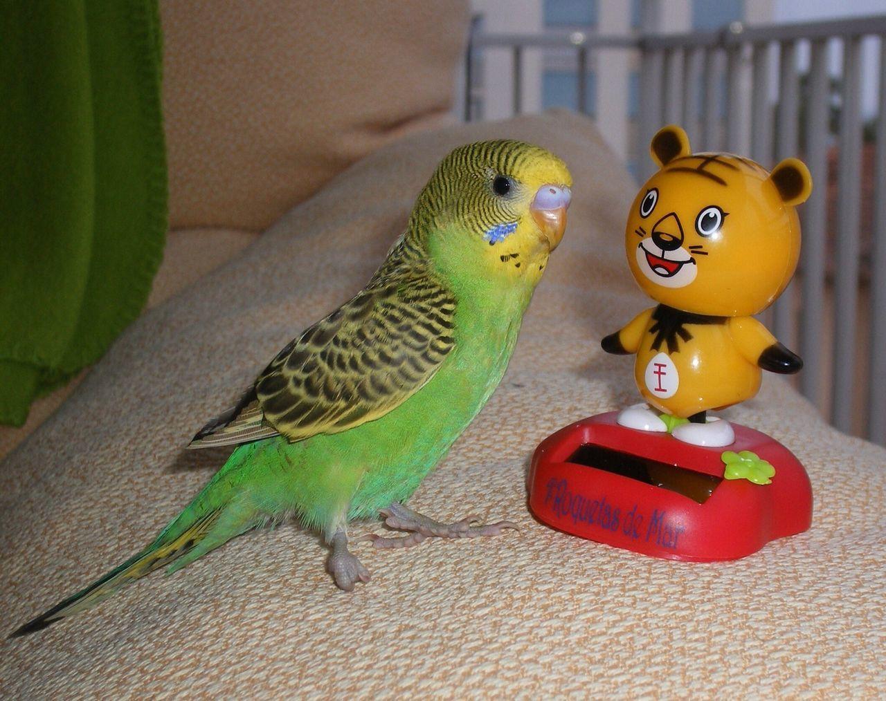 Beautiful stock photos of toys, Animal Themes, Bed, Bird, Budgerigar