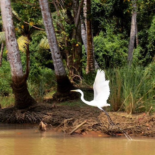 The leap before she takes OFF!! Birdwatching Backwaters Timetotakeoff Neyarcannal Keraladiaries Instapic Instagood