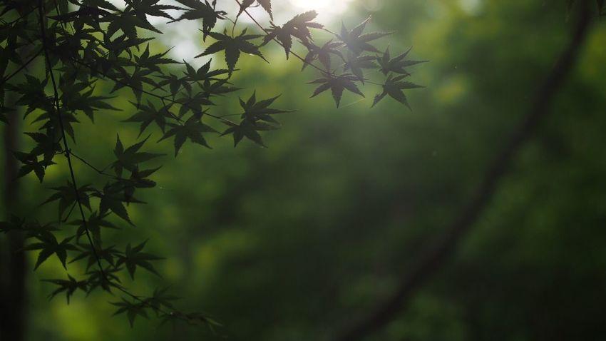 光… Japanese Garden Talking Photos Green Nature Japan,koyto EyeEm Best Shots EyeEm Nature Lover Beautiful Nature Light And Shadow もみじ