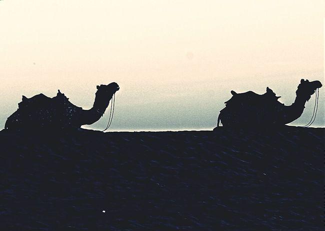 Rajasthan Tourism Camel Desert Desertsafari Camel Ride Amazing Experience First Eyeem Photo