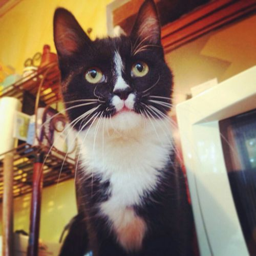 Have you met Nausika? Catoftheday Cats EyeEmAnimalLover Playingwiththeanimals Meow Cute Cats Kitty