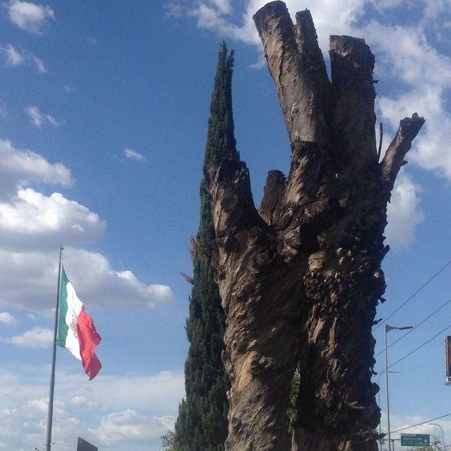 Death Nature and my Beautiful Flag ,esta foto la tomé el 9 de julio del 2016,en la Ciudad De México Angulo De Visión Baja Azul Bandera Naturaleza Primer Plano Clima Nubes Cielo Nube Cellphone Photography Clouds And Sky Clouds Flag Death Tree Colors Color