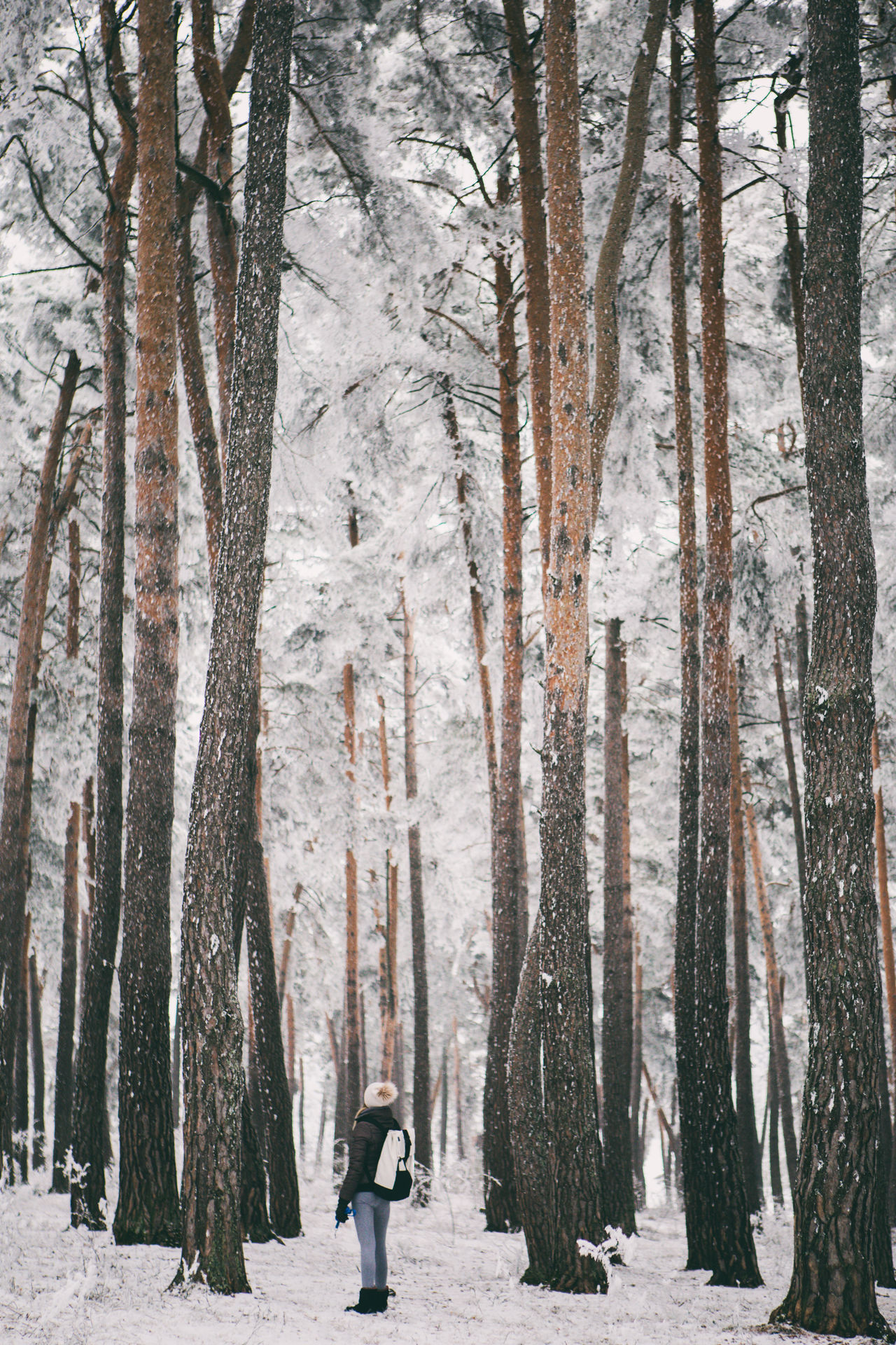 Beautiful stock photos of winter,  Bare Tree,  Beauty In Nature,  Birch Tree,  Cold Temperature