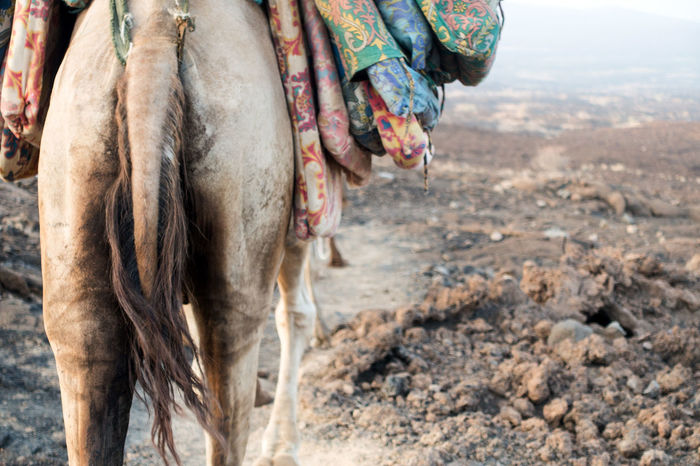 Camel in the heat. Travel Photography Travelationship Travel Showcase: December Wanderlust Danakil Depression Ethiopia Camel Animal Photography The Tourist