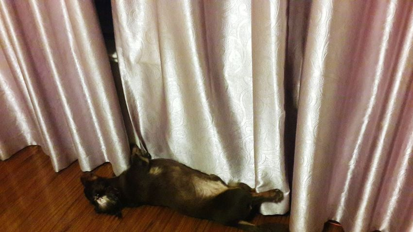 enjoying the air-conditioner Dachshunds My Little Puppy Puppy Love Dog Sausagedog Cute Pets Doglover Dachshund I Love My Dog Dachshundloversclub