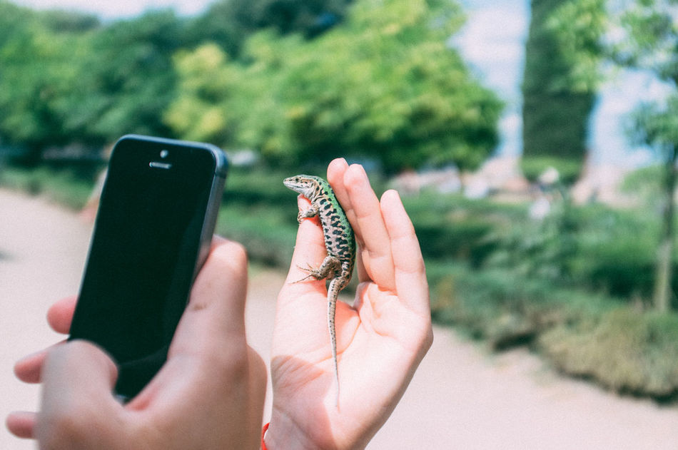 Beautiful stock photos of mobile, Day, Focus On Foreground, Holding, Human Hand