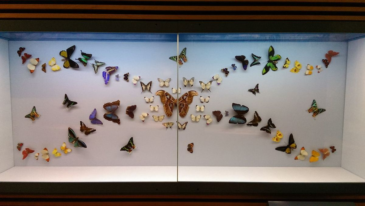 The Purist (no Edit, No Filter) Butterflies Butterfly ❤ Nature_collection