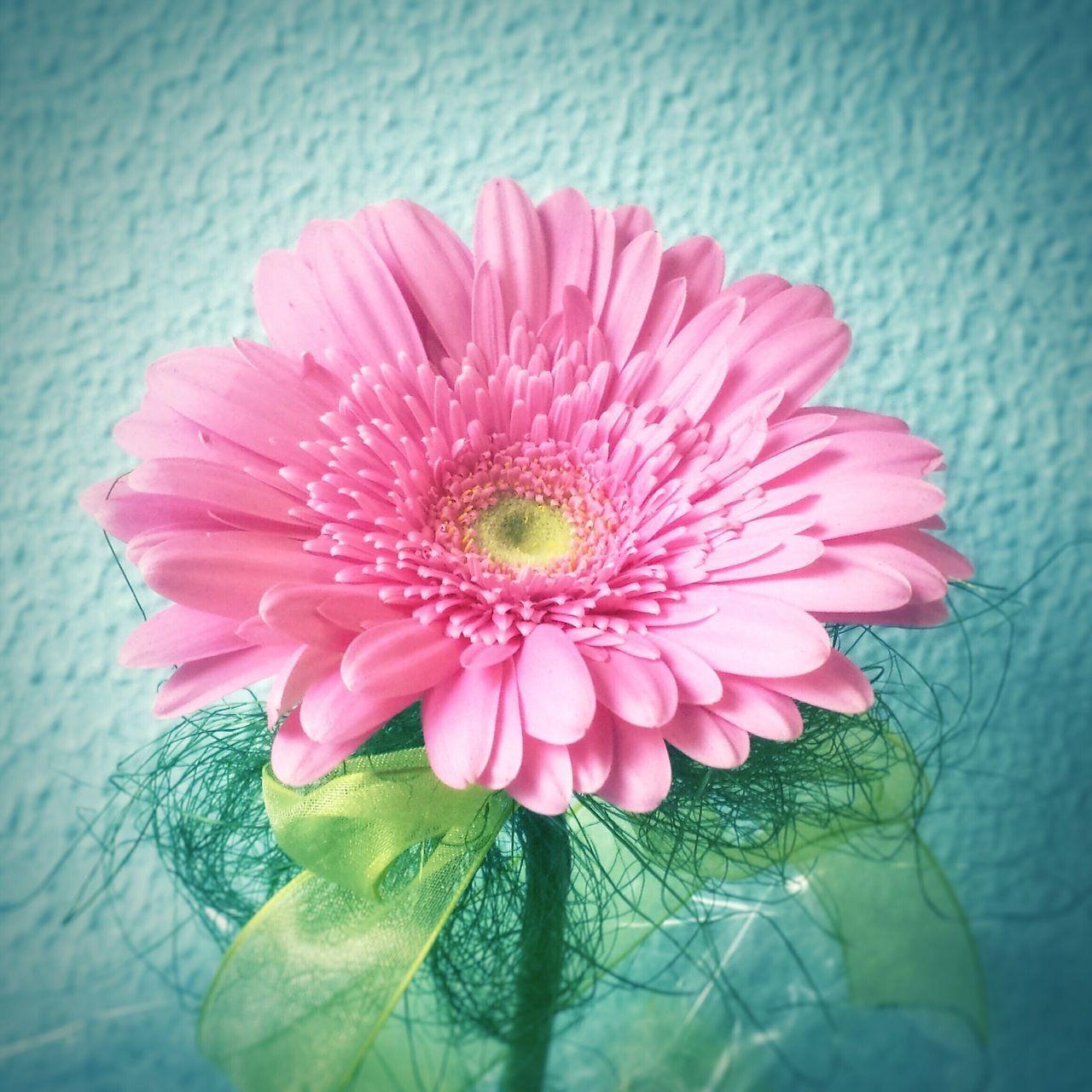 Pastel Power Pink Flowers Flowerporn Flower Collection EyeEm Best Shots EyeEm Nature Lover Eye4photography  EyeEm Gallery Pink Flower Pink Flowers Pastel Colors Pastel Power! Minimal Minimalism Minimal Pastel Millennial Pink