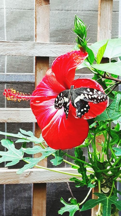 Colour Of Life Butterfly Butterfly Garden Delicate Beauty