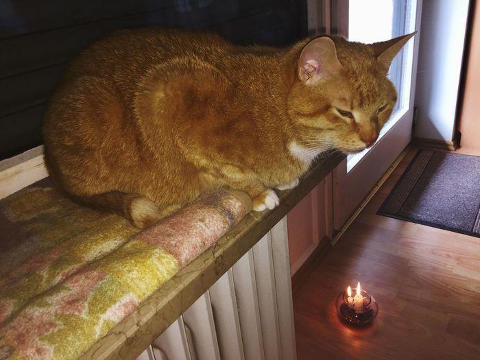 Smelling Pets Domestic Cat Cat Lovers 🐱💞 Catch The Moment Catch Dreams Katzenleben