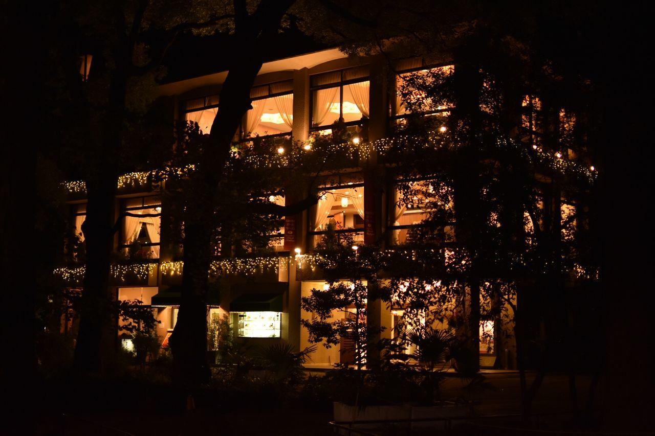 window, indoors, architecture, no people, built structure, illuminated, tree, night, nature