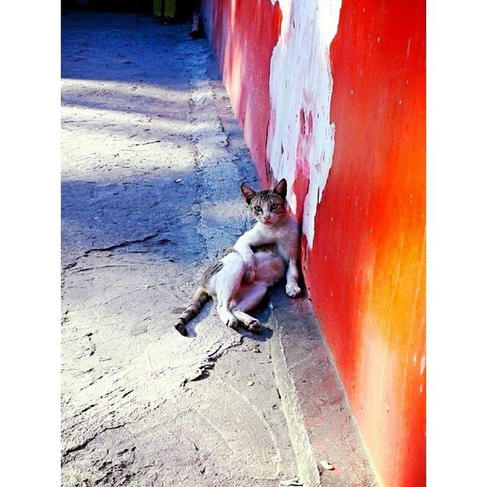 Someone is miffed...I didn't knock! Hahaha! Good morning! :3 Cats Catsofinstagram Catsforever Caturday saturdays saturdaymornings officelife meow kitties kitteh sunshine
