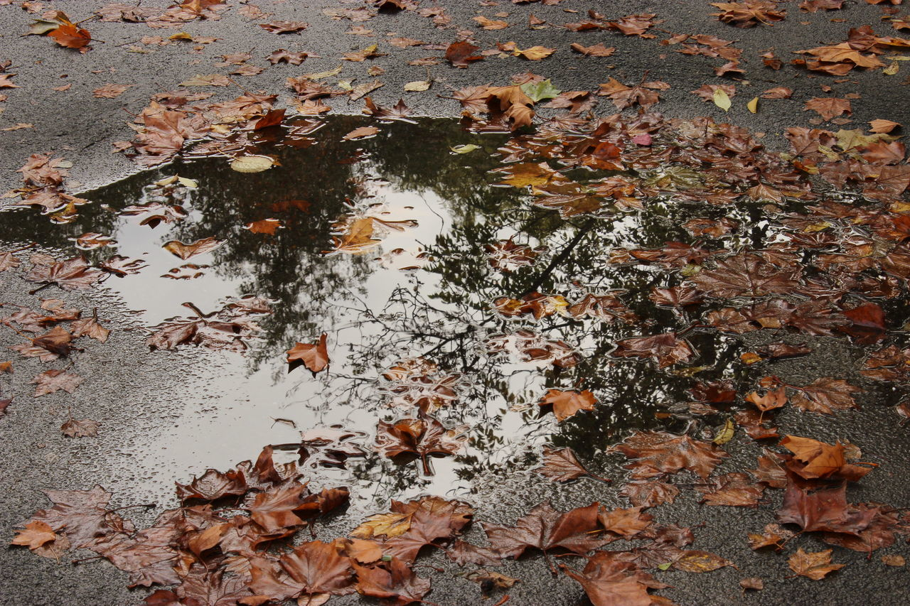 autumn, leaf, change, leaves, nature, dry, fallen, maple leaf, day, no people, water, maple, outdoors, high angle view, reflection, floating on water, tranquility, large group of animals, growth, lake, tree, beauty in nature, puddle, lily pad, close-up