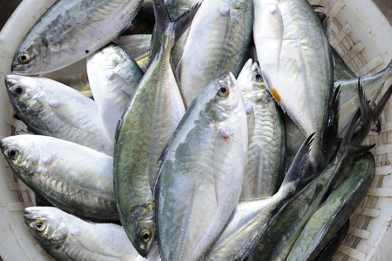 A bucket of fresh fish Animal Themes Dead Animal Fish Fish Market Food Food And Drink For Sale Freshness Group Of Objects Healthy Eating Heap Raw Raw Food Retail  Sale Seafood
