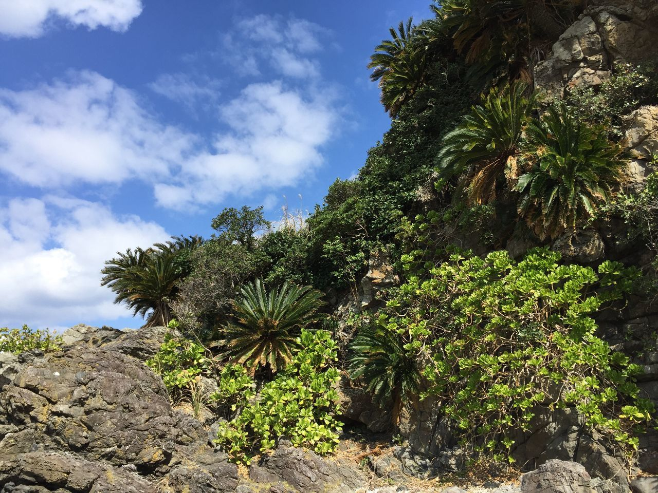 Tree Growth Nature Sky Cloud - Sky Palm Tree No People Beauty In Nature Green Color Outdoors Rock - Object Low Angle View Plant Scenics Day Green Color Amami Island