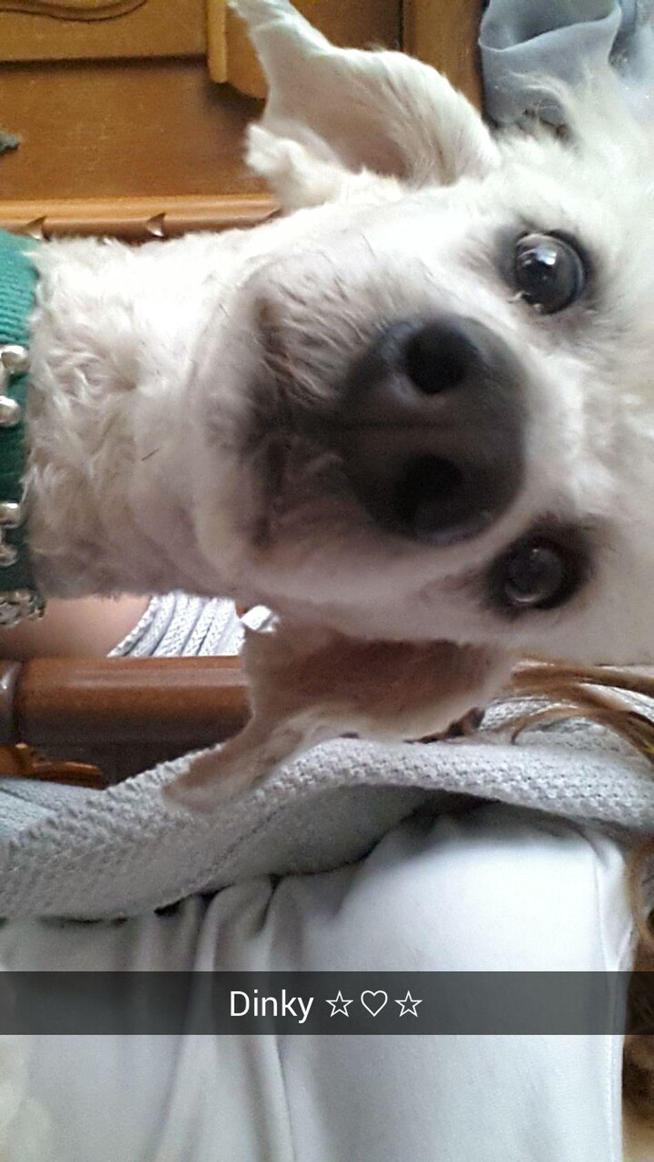 Snap ~ Dog Iloveit ☆♡