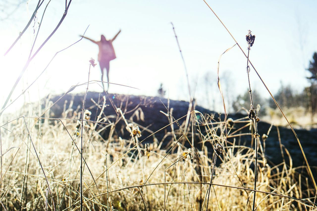 grass, field, nature, growth, jumping, outdoors, day, sky, no people