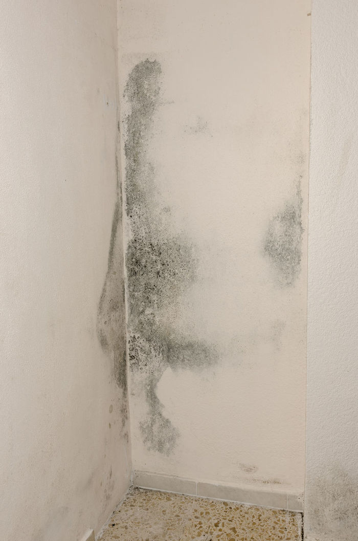 Allergy, Asthma Bacteria, Clumsiness Construction Damaged Damp Dew, Dirt Grunge Home House, Humidity Indoor Microorganism, Mildew, Moisture, Mold, Musty, No People Unhealthy Unhygienic Wall Wet Wetness