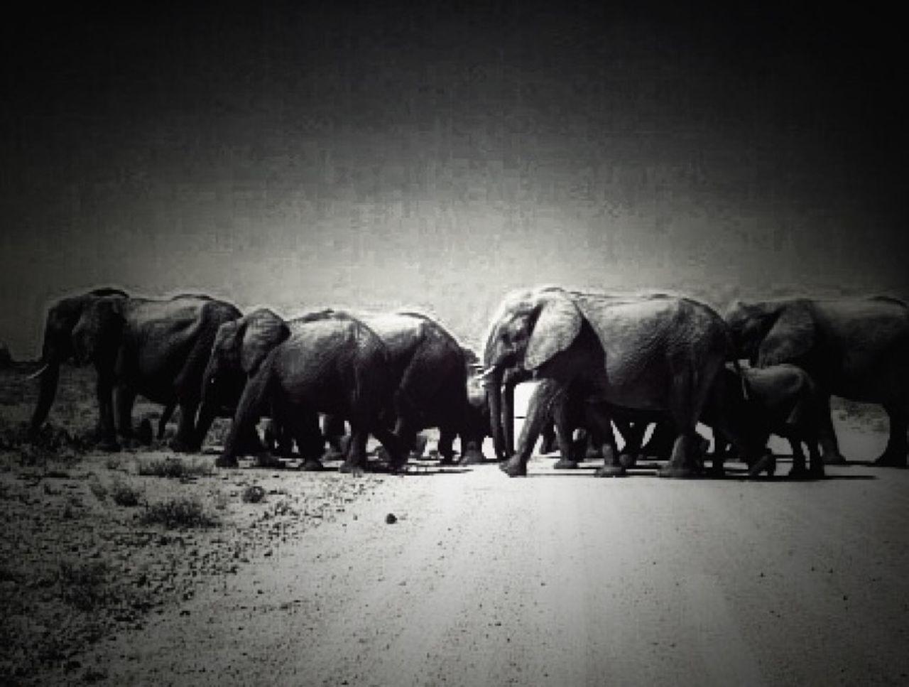 Namibie Etocha Wildlife Elephant Africa Photographer Traveling Travel Voyage Animals Noiretblanc