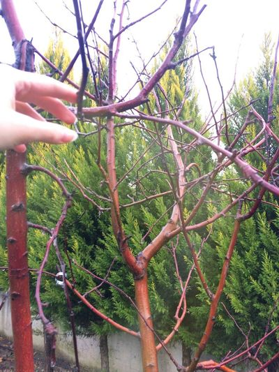 Human Hand Tree Holding One Person Real People Human Body Part Outdoors Growth Day Nature Futuristic Adapted To The City EyeEmNewHere Freshness