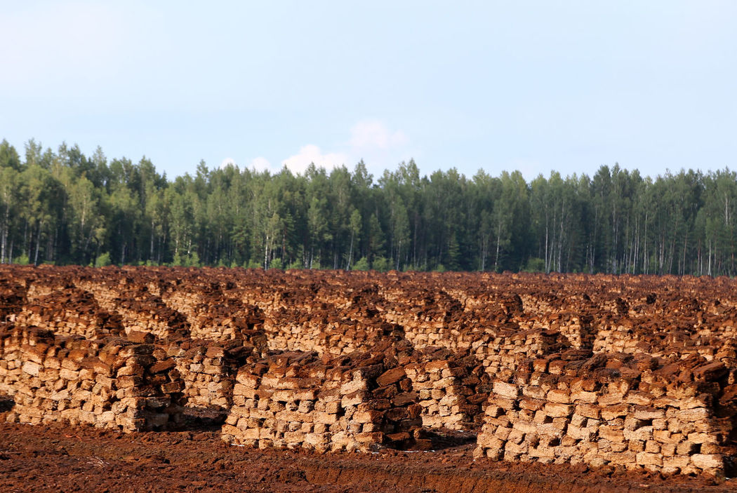 peat is stacked in rows waiting for transport in a forest in Latvia. Wald Und Torf Lettland  Torffabrik Brennstoff Travelling Peat Extraction Peat Field Peat Renewable Energy Peat Mining Harvesting Peat Colour Of Life Peat Bog Agriculture Heating Period Evening Light Fossil Fuels Torfballen Swamp Fossil Fuel Torffeld Travelling The Baltic States LatviaBog Peat Torfabbau