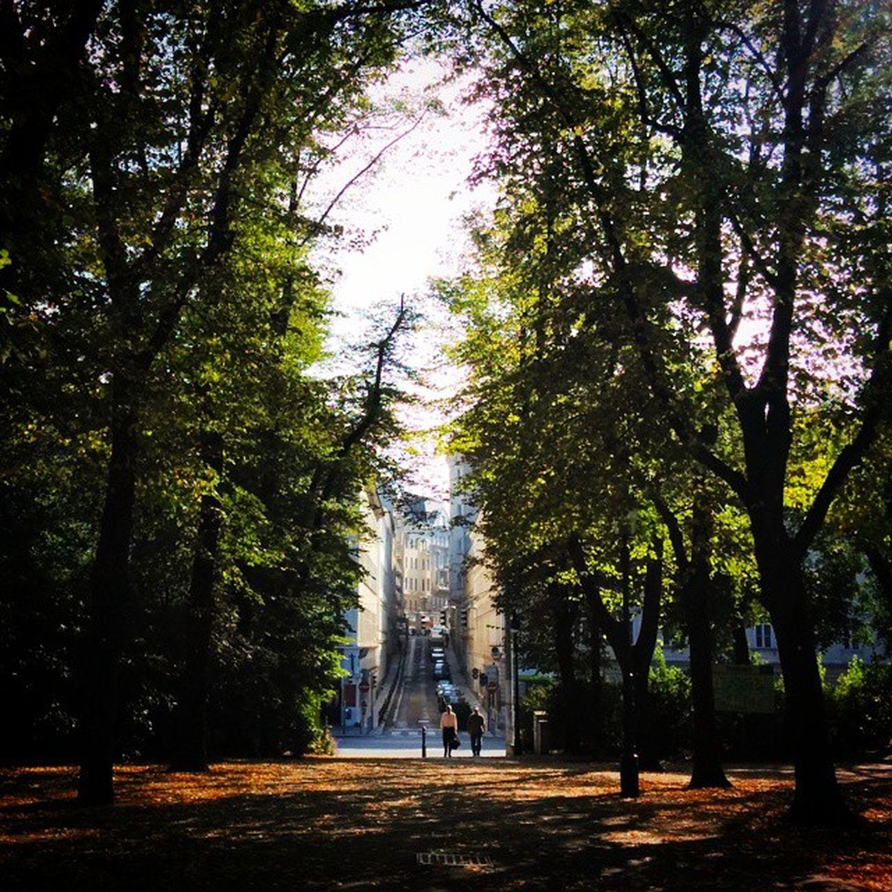 Outofthewoods Intothecity Stadtpark Viennainautumn Vienna