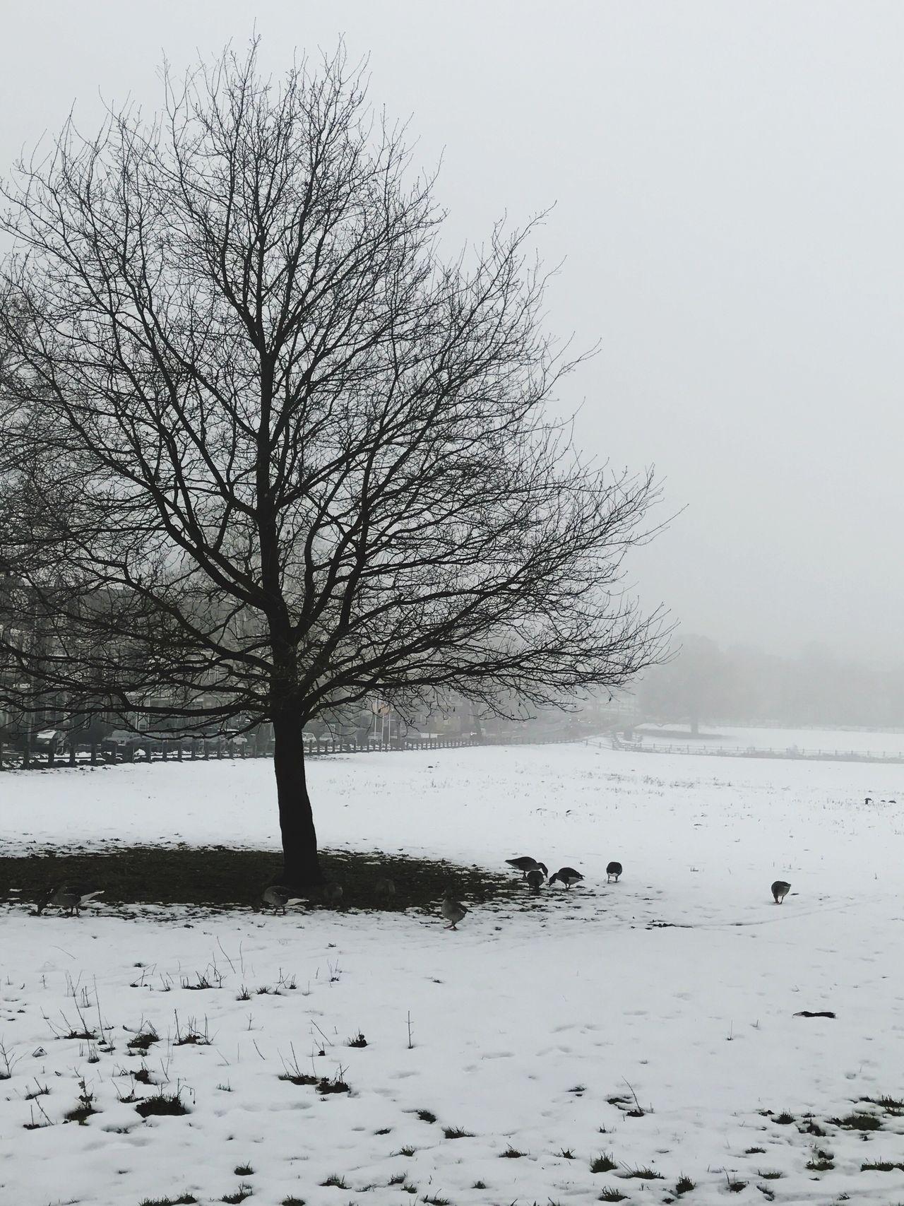 Nature Winter Fog Sonsbeekpark Sonsbeek Witte Villa Lonely Naturelovers Emo White Snow ❄ Winter_collection Arnhem Netherlands Netherlands ❤ Netherlands Nature Goose