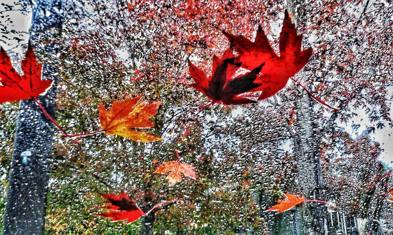 Raineyday Fall Leaves The Beauty Of Nature Changing Seasons EmmieC