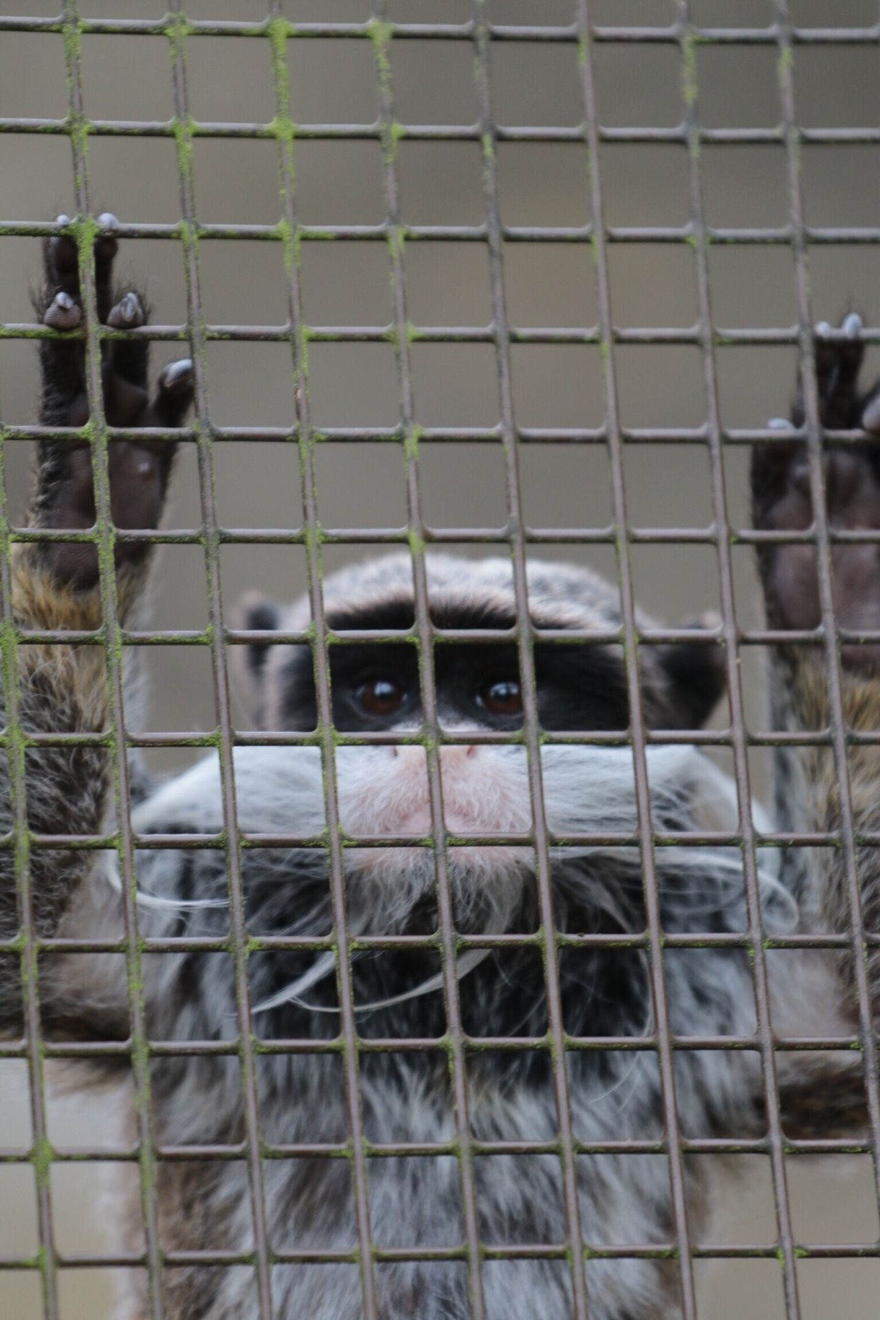 Why Me?  Help Help Me Caged Freedom Behind Bars