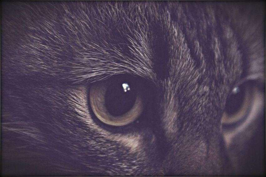 Cat Pet Animal Hello World