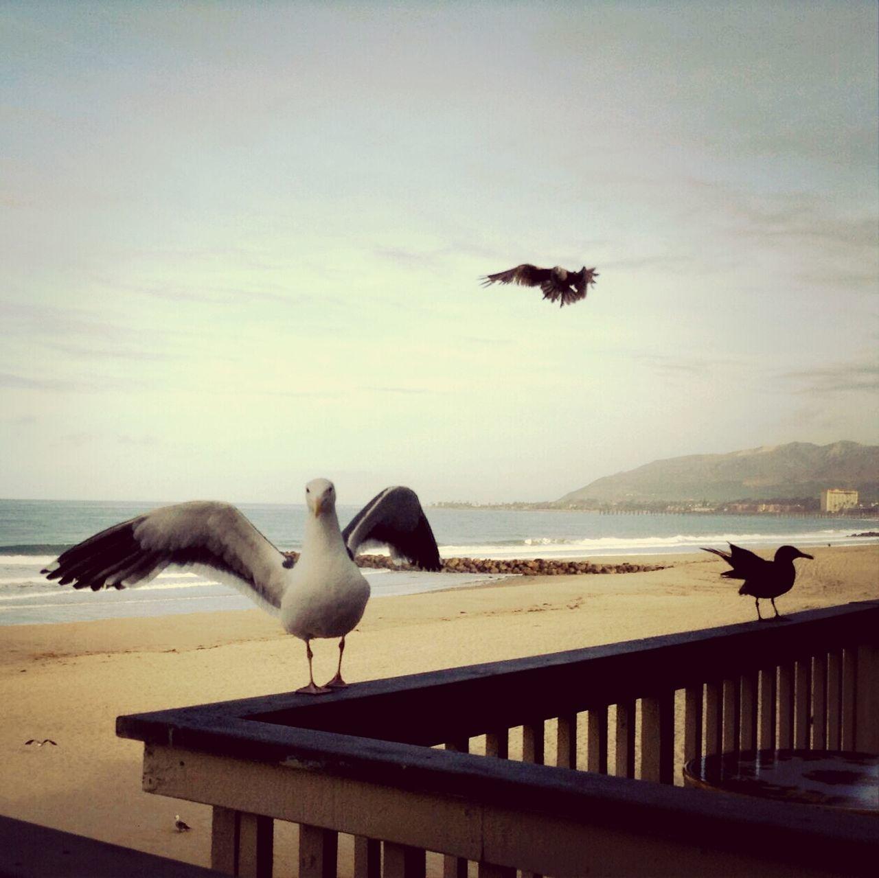 Country N Seaside Bird Beach Three my bffs The Moment - 2015 EyeEm Awards The Traveler - 2015 EyeEm Awards Life Is A Beach Hello World