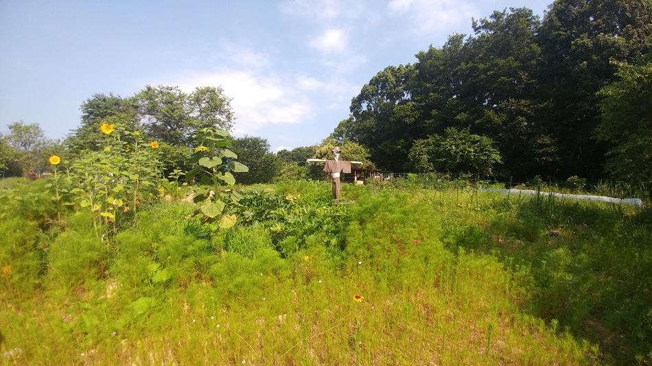 Nature Outdoors Tree Val  Miles Away LG  G5se Lgg5se Japan Japan Scenery Japanese Garden Scenics Freshness Scarecrow Growth Agriculture Tree Nature Rural Scene Sky Plant Sunlight Beauty In Nature Flower Field