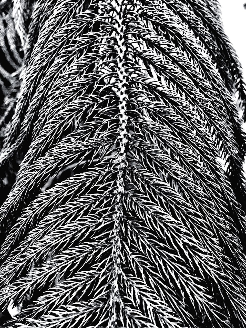 pattern, full frame, backgrounds, no people, close-up, textured, indoors, day, wool