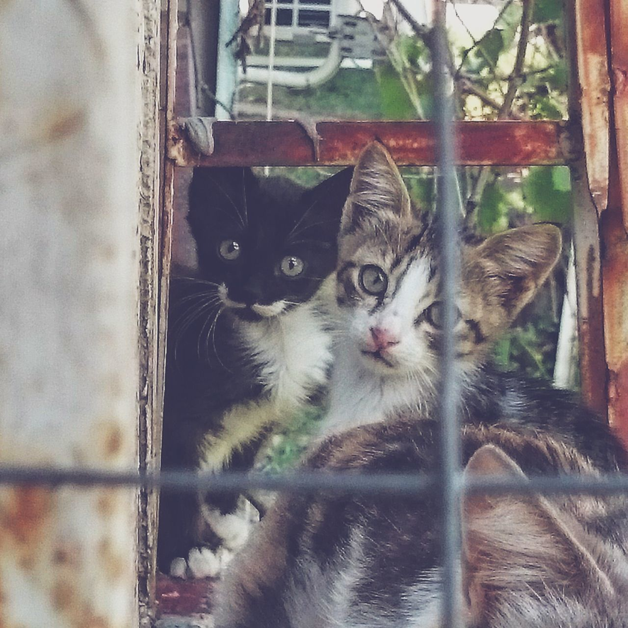 Beautiful stock photos of schnurrbart, Animal Themes, Day, Domestic Animals, Domestic Cat