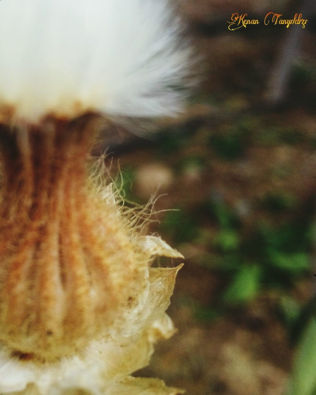 one animal, close-up, animal themes, focus on foreground, nature, day, no people, outdoors, mammal