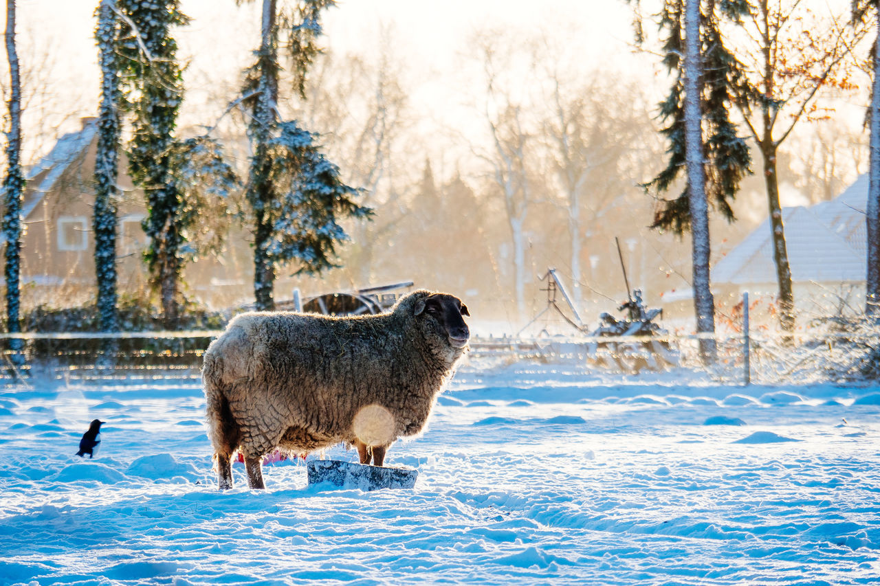North Germany | Winter Animal Animal Themes Animal Wildlife Animals In The Wild Beauty In Nature Cold Temperature Day Frozen Hoofed Mammal Mammal Moose Nature No People Outdoors Scenics Snow Snowing Tree Wilderness Winter