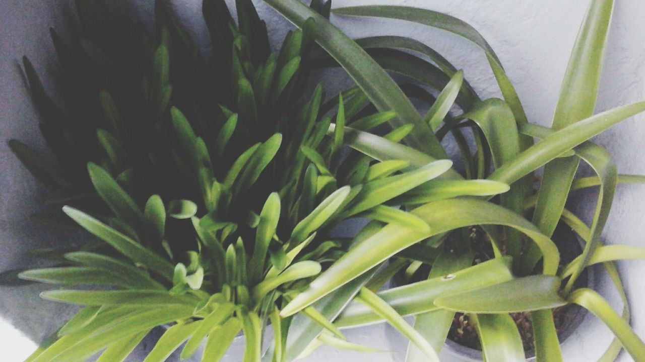 plant, leaf, growth, green color, close-up, no people, freshness, nature, indoors, food, day, flower, beauty in nature